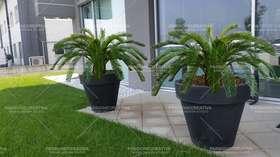 cycas palma ambientata con vaso grigio h 160 cm